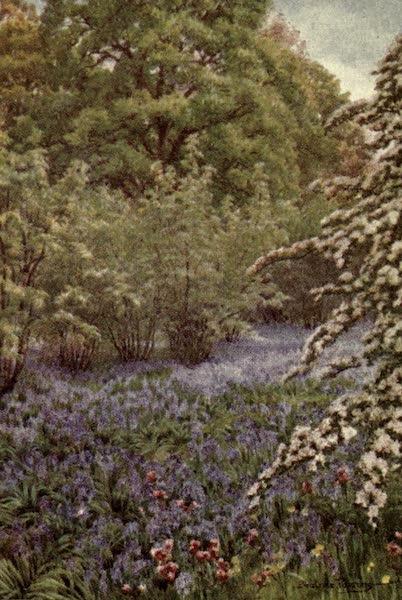 A Book of Old-World Gardens - A Wild Garden (1918)