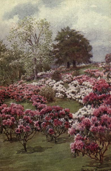 A Book of Old-World Gardens - Rhododendrons (1918)
