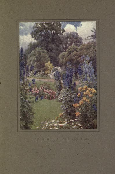 A Book of Old-World Gardens - Larkspurs of all Colours (1918)