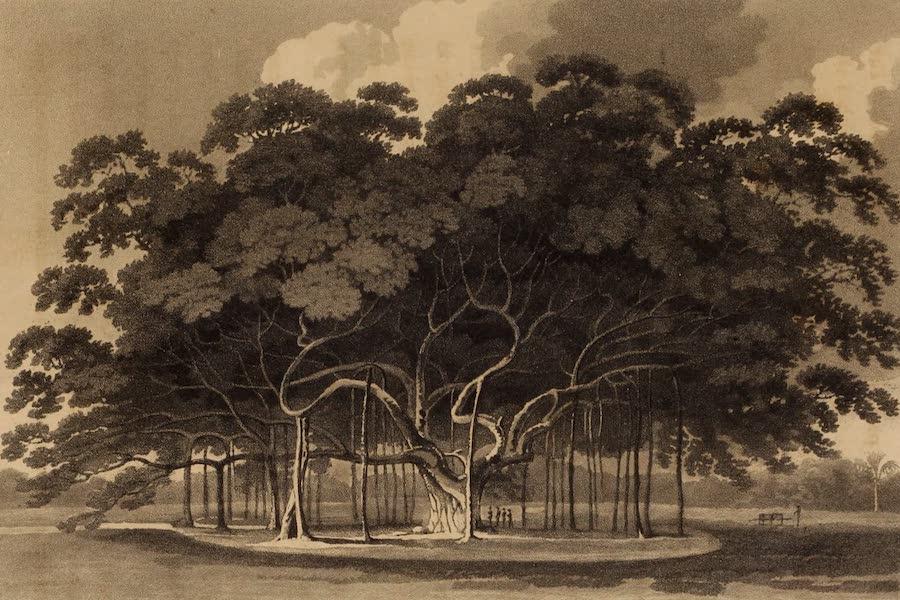 A Description of Ceylon Vol. 1 - Banyan Tree (1807)