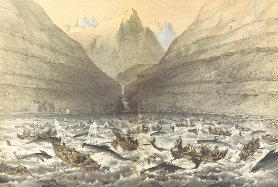 A Narrative of the Cruise of the Yacht Maria - Whale Hunting in Westmannshaven Bay (1855)