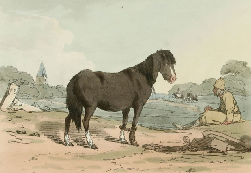 A Picturesque Representation of the Russians Vol. 2 - Finland Horse (1804)