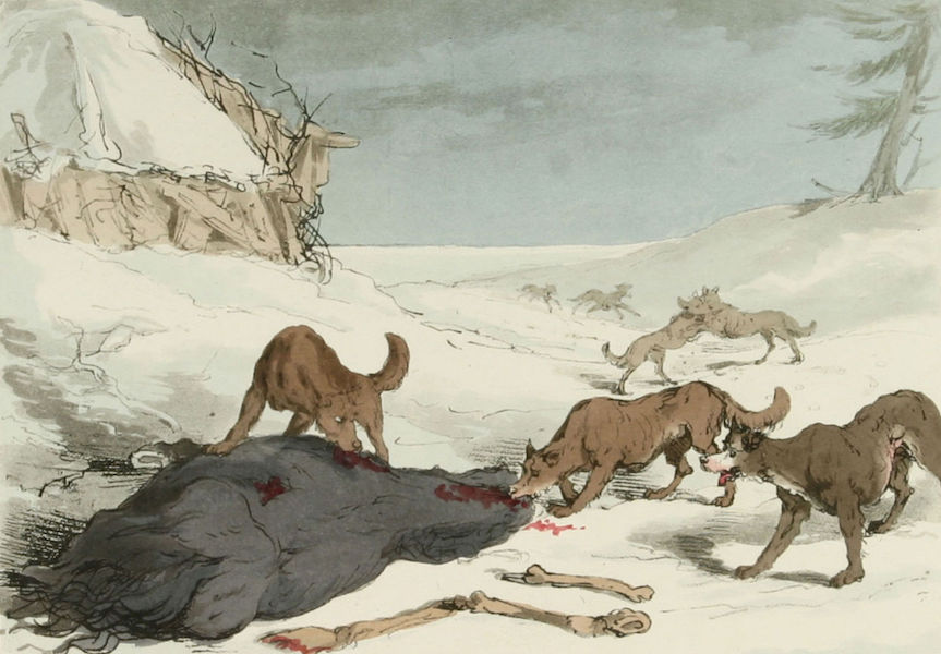 A Picturesque Representation of the Russians Vol. 3 - The Wolf Hunt (1804)