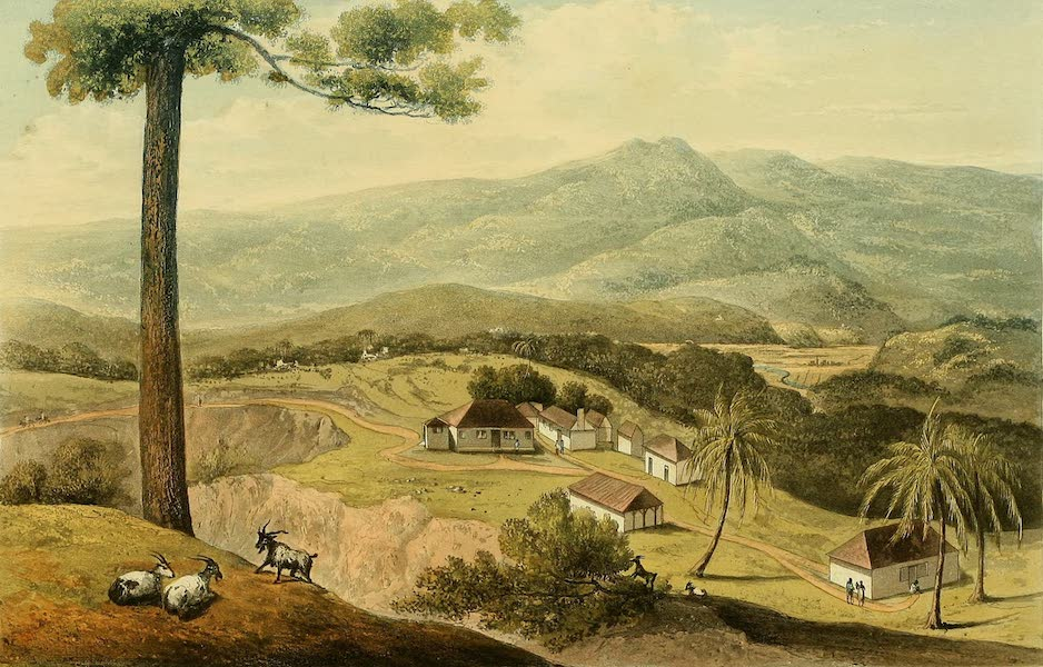 A Picturesque Tour of the Island of Jamaica - Golden Vale, Portland  (1825)