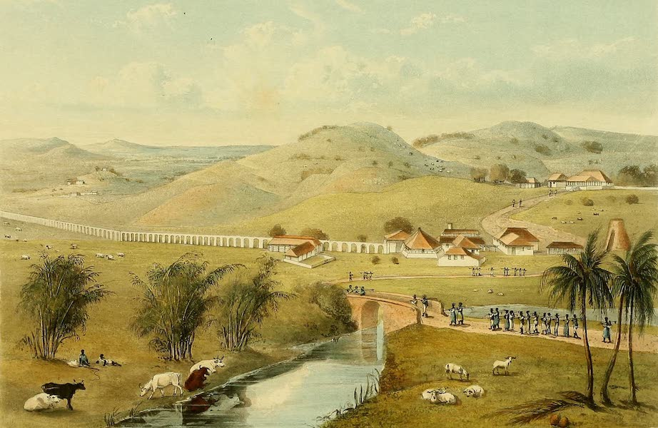 A Picturesque Tour of the Island of Jamaica - Trinity Estate, St. Mary's (1825)