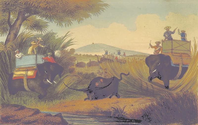 A Sketch of Assam - Buffalo Shooting in Assam (1847)
