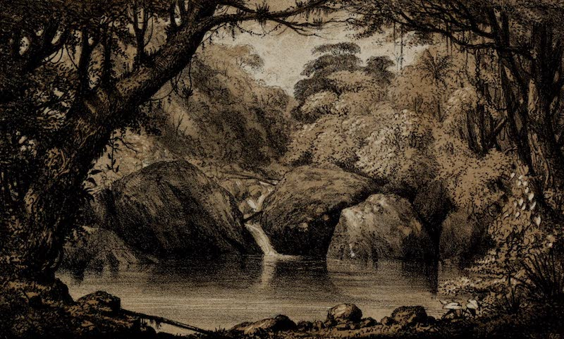 A Sketcher's Tour Round the World - Forest in the Organ Mountains (1854)