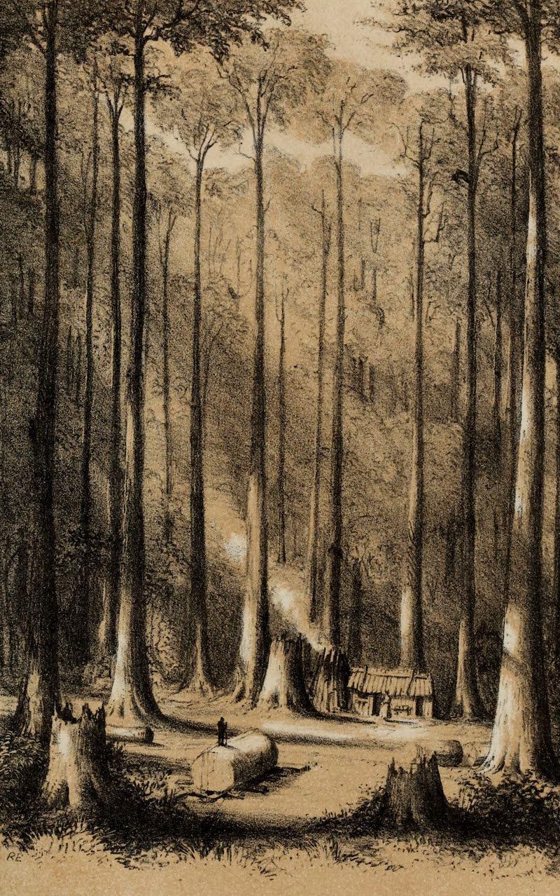 A Sketcher's Tour Round the World - Gum Forest (1854)