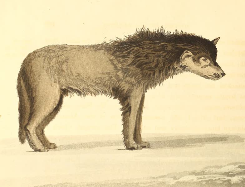 A Voyage of Discovery - A Sledge Dog of the Arctic Highlander of Lat. 77. N. (1819)