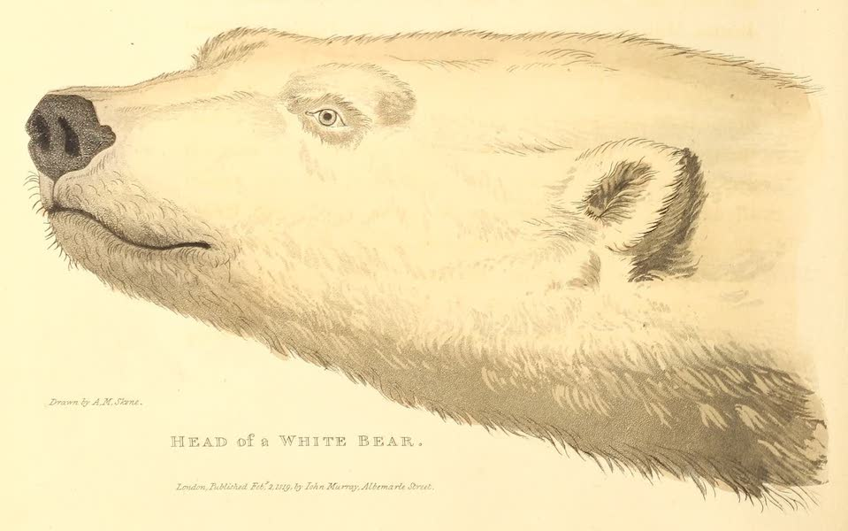 A Voyage of Discovery - Head of a White Bear (1819)