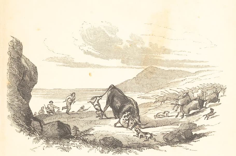 A Voyage of Discovery and Research in the Southern and Antarctic Regions Vol. 2 - Hunting Wild Cattle in the Falkland Islands (1847)