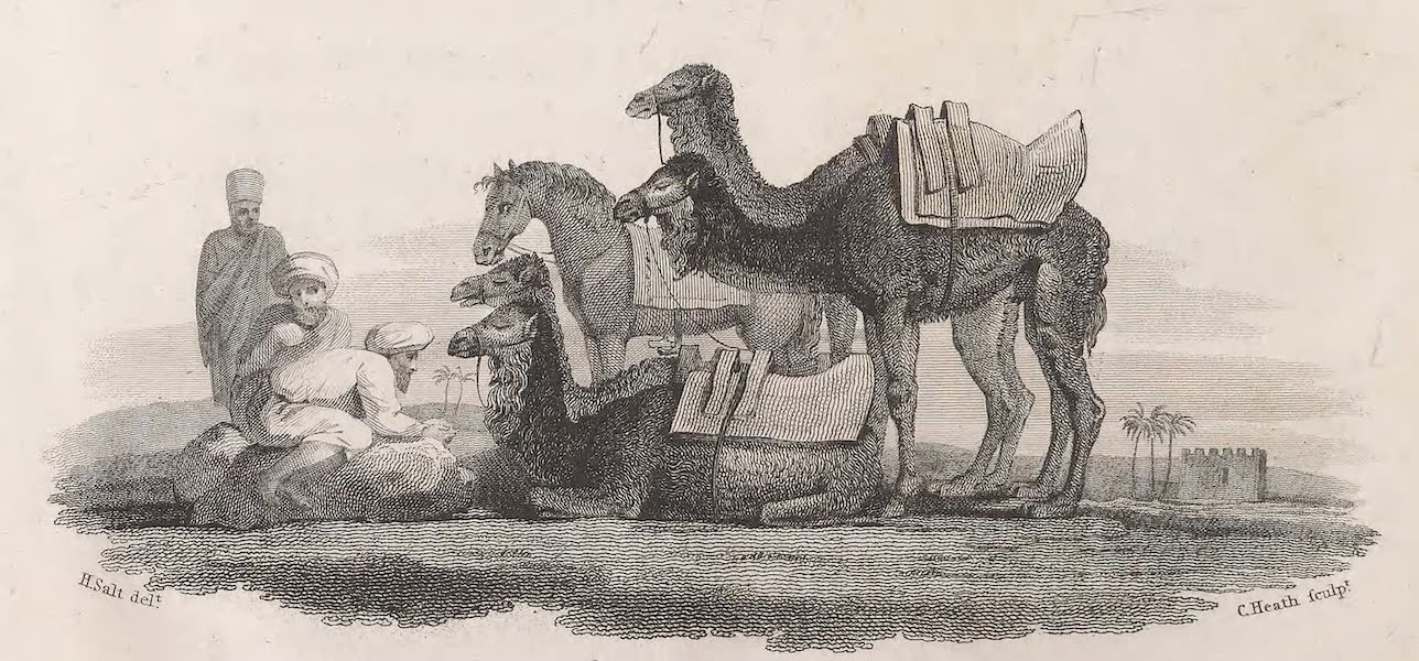 A Voyage to Abyssinia - Camels After a March (1814)