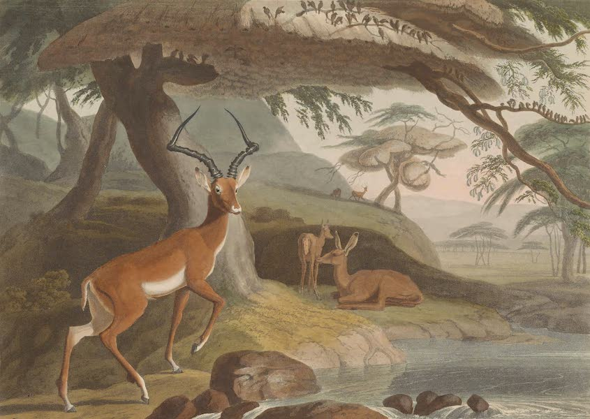 African Scenery and Animals - The Pallah (1804)