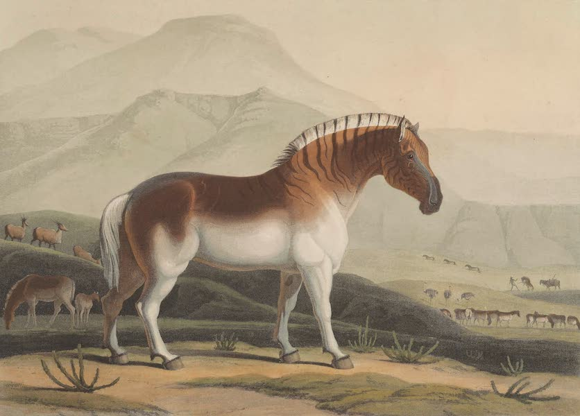 African Scenery and Animals - The Quahkah (1804)
