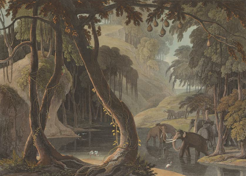 African Scenery and Animals - Scene in Sitsikamma (1804)
