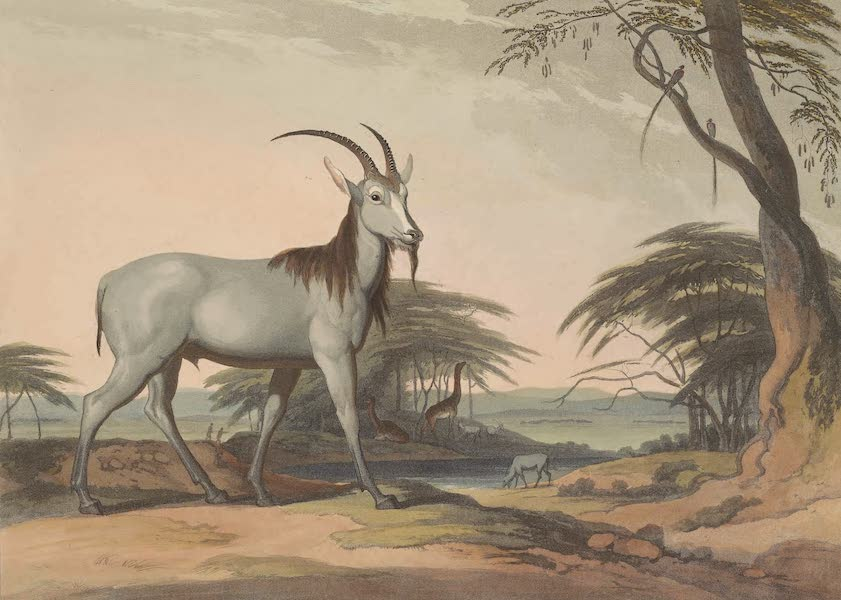 African Scenery and Animals - The Tackhaitse (1804)