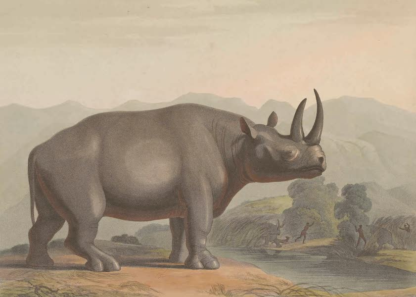 African Scenery and Animals - The African Rhinosceros (1804)
