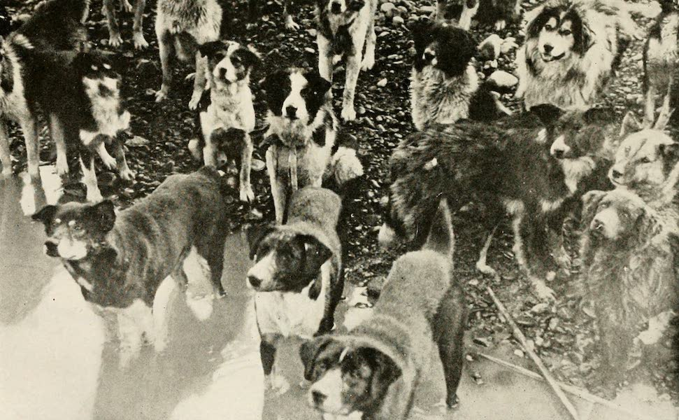 Alaska, Our Beautiful Northland of Opportunity - The Yukon Dogs (1919)