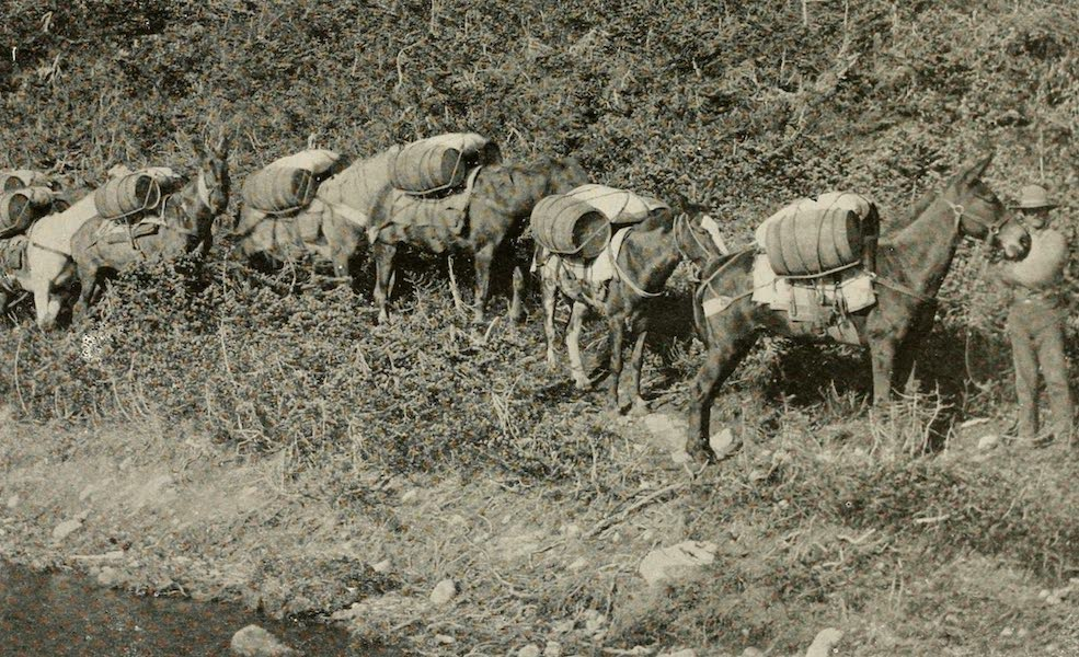 Alaska, Our Beautiful Northland of Opportunity - A Pack Train of Early Days (1919)