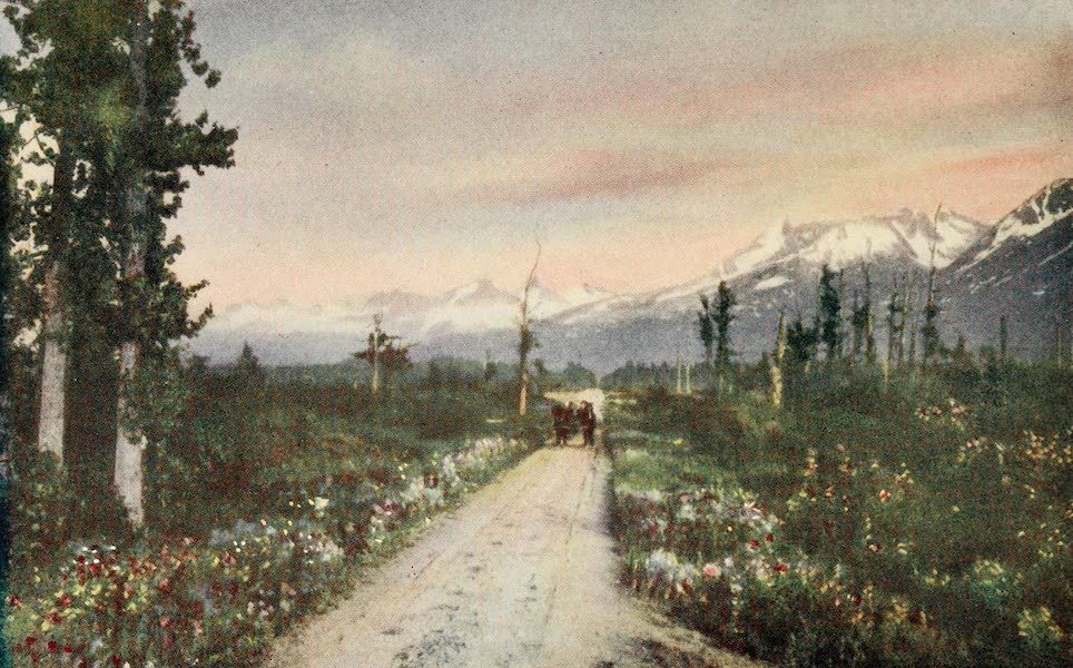 Alaska, Our Beautiful Northland of Opportunity - Wild Flowers (1919)