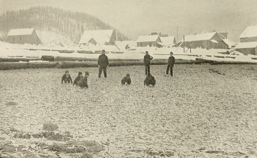 Alaska, Our Beautiful Northland of Opportunity - An Acre of Herring (1919)