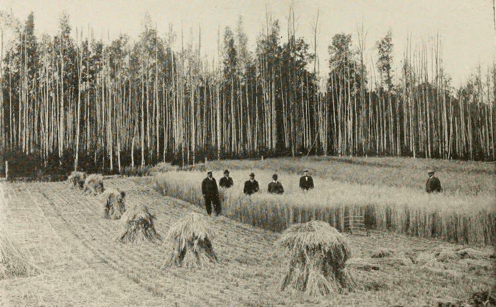 Alaska, Our Beautiful Northland of Opportunity - Field of Grain on the Government Experimental Farm at Fairbanks (1919)