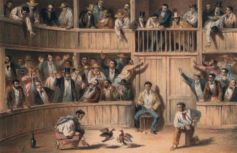 Album Pintoresco de la Isla de Cuba - Valla de Gallos (1855)