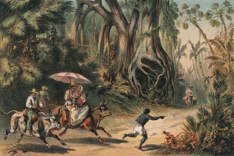 Album Pintoresco de la Isla de Cuba - Cercanias de Baracoa y modo de viajar de sus naturales (1855)