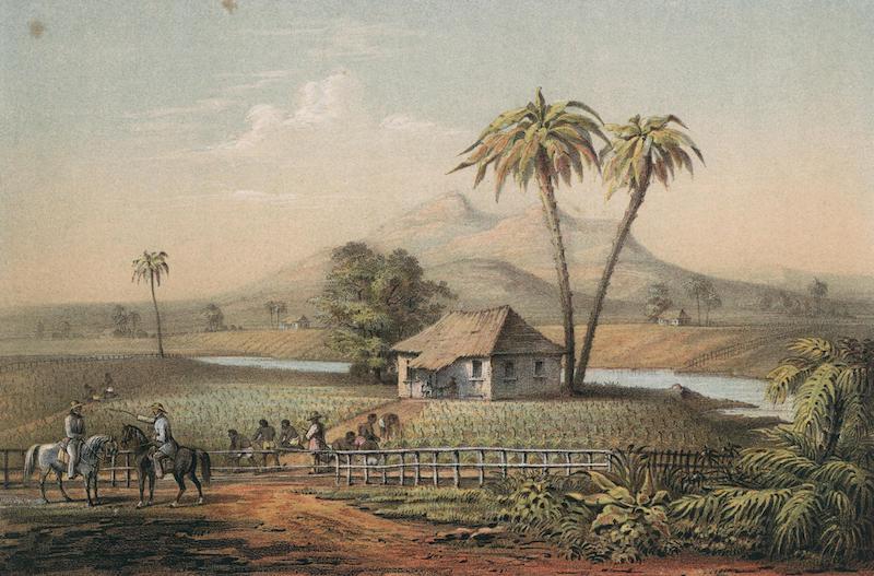 Album Pintoresco de la Isla de Cuba - Vista de una Vega de Tabaco (1855)