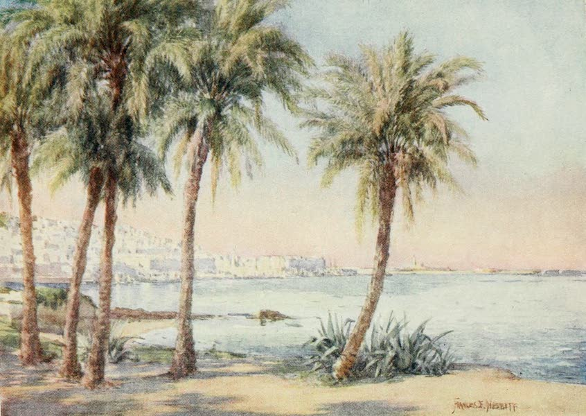 Algeria and Tunis, Painted and Described - Algiers from the Jardin d'Essai (1906)
