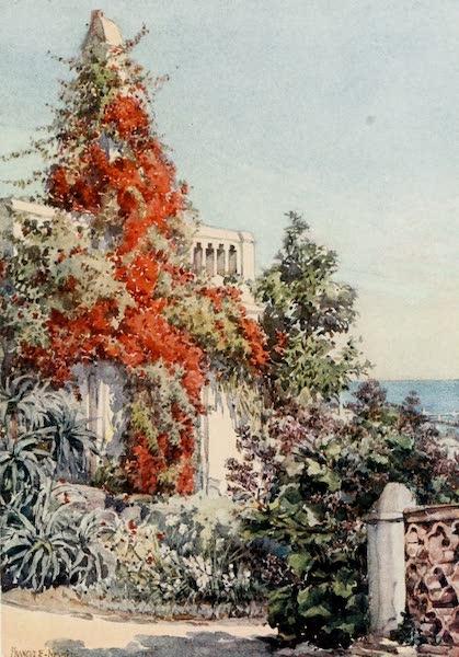Algeria and Tunis, Painted and Described - Bougainvillaea, Algiers (1906)