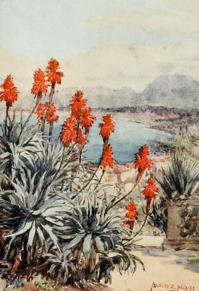 Algeria and Tunis, Painted and Described - The Red Aloes (1906)