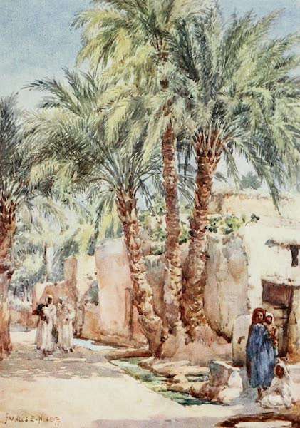 Algeria and Tunis, Painted and Described - The Palm Village (1906)