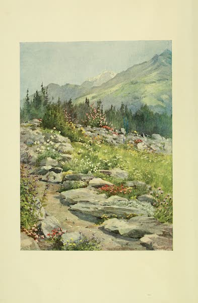 Alpine Flowers and Gardens, Painted and Described - Alpine Garden (The Linnea) at Bourg St. Pierre (1910)