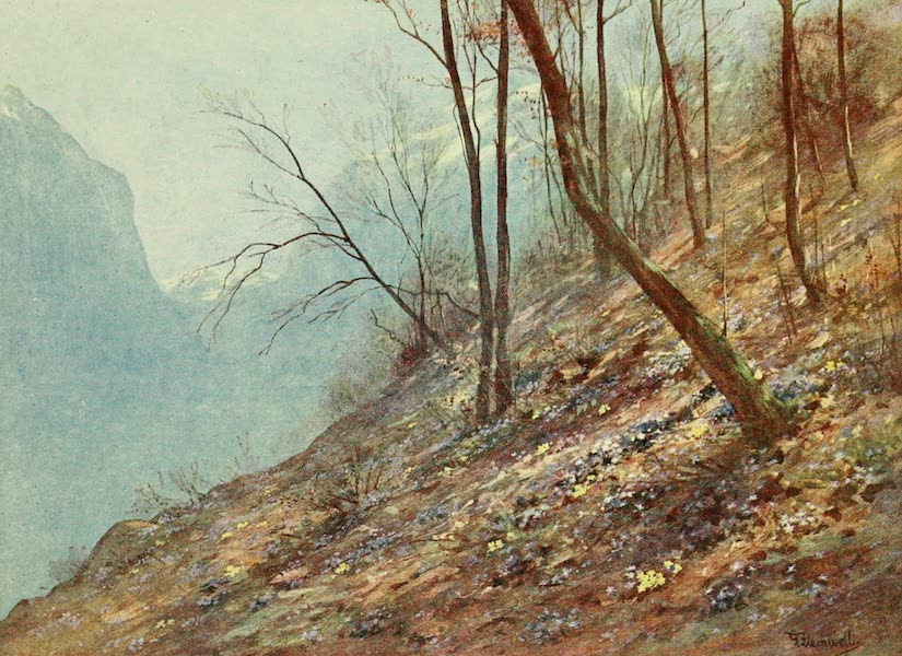 Alpine Flowers and Gardens, Painted and Described - Hepatica in the Woods at Bex, in the Rhone Valley (1910)