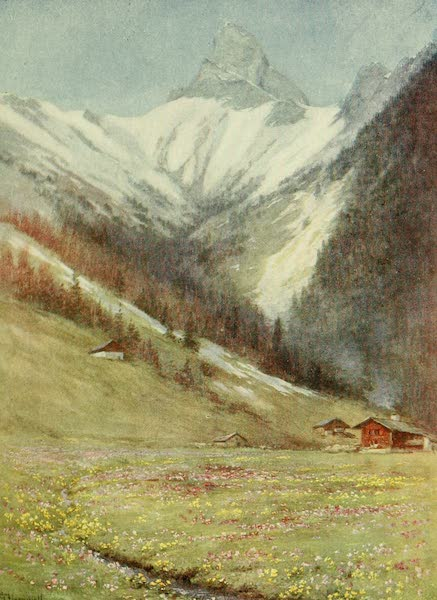 Alpine Flowers and Gardens, Painted and Described - Primula farinosa, the Oxlip and Marsh Marigold at Les Plans (1910)