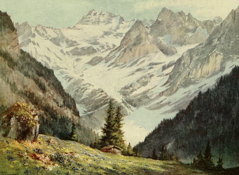 Alpine Flowers and Gardens, Painted and Described - Gentiana verna and the Glacier de Plan-Nove (1910)