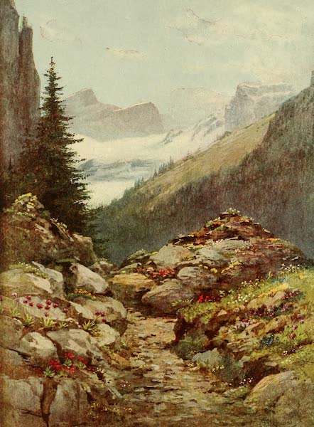 Alpine Flowers and Gardens, Painted and Described - Alpine Garden (the Thomasia) at Pont de Nant (1910)