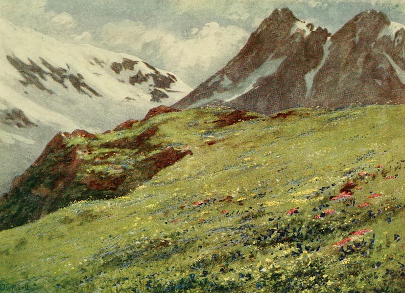 Alpine Flowers and Gardens, Painted and Described - Gentiana Kochiana and Silene acaulis at the Col de la Forclaz (1910)