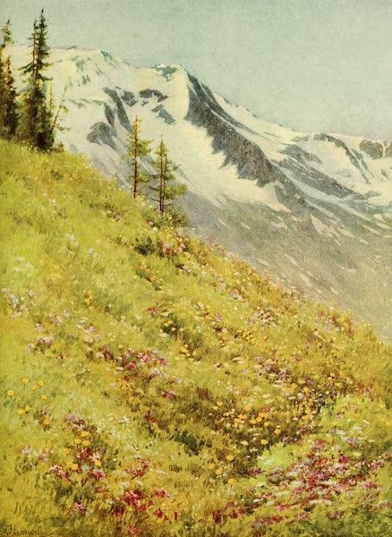 Alpine Flowers and Gardens, Painted and Described - Trollius europaeus at the Col de la Forclaz  (1910)