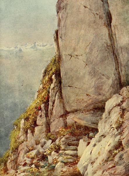 Alpine Flowers and Gardens, Painted and Described - Alpine Garden (the Rambertia) on the Rochers de Naye (1910)