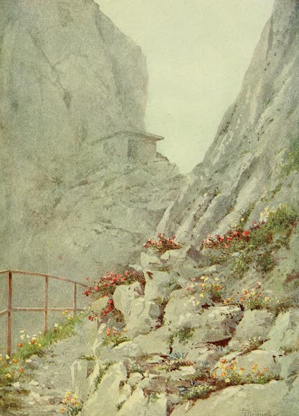 Alpine Flowers and Gardens, Painted and Described - Alpines on the Rochers de Naye (1910)