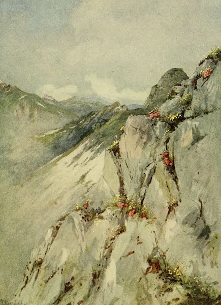 Alpine Flowers and Gardens, Painted and Described - Alpines on the Rocks of the Rochers de Naye (1910)
