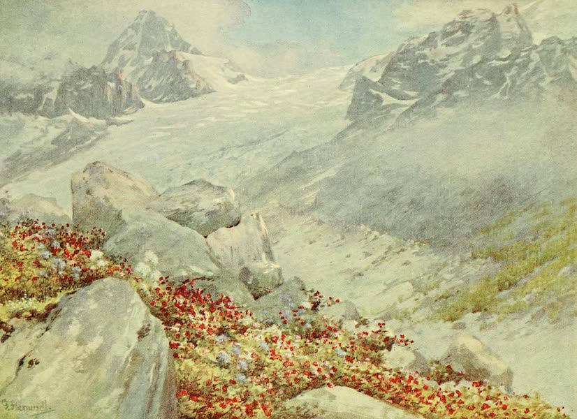 Alpine Flowers and Gardens, Painted and Described - Rhododendron and the Glacier de Trient (1910)