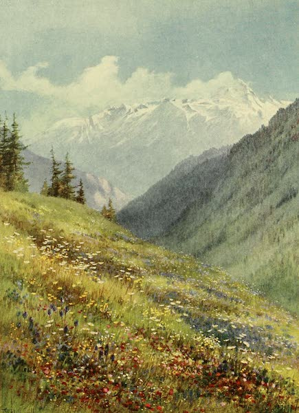Alpine Flowers and Gardens, Painted and Described - Hayfields in July at the Col de la Forclaz (1910)