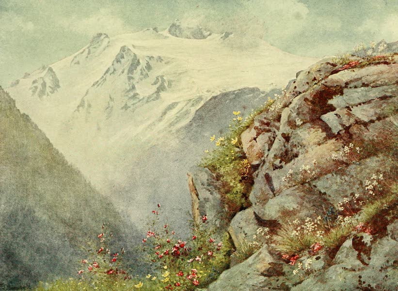 Alpine Flowers and Gardens, Painted and Described - Saxifrage and Alpine Eglantine with the Glacier des Grands (1910)