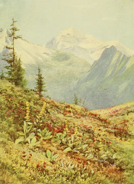 Alpine Flowers and Gardens, Painted and Described - The Yellow Gentian and Mont Blanc (1910)