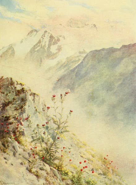 Alpine Flowers and Gardens, Painted and Described - Thistles, the Apollo Butterfly, and the Aiguille du Tour (1910)