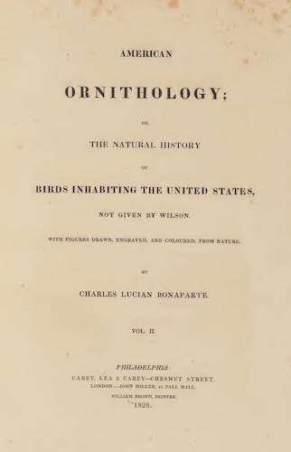 Aquatint & Lithography - American Ornithology Vol. 2