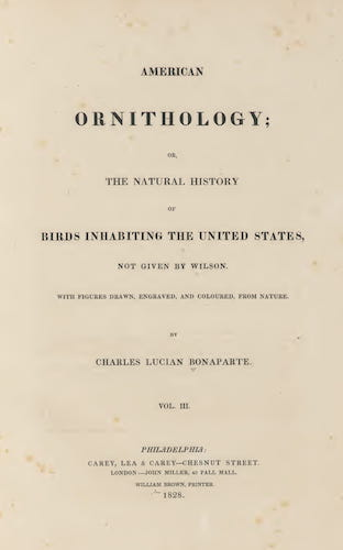 Aquatint & Lithography - American Ornithology Vol. 3
